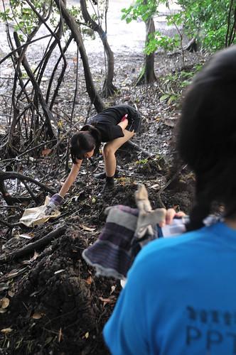 029iccs-pandan_mangrove-11sep2010[kpinto]