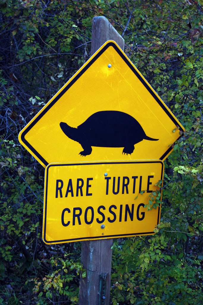 Road sign: rare turtle crossing