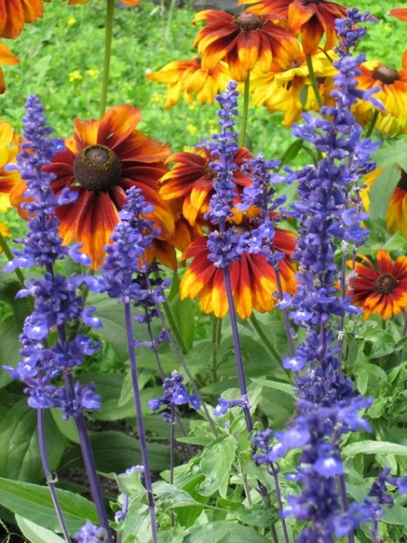 purple and orange flower garden orange purple flower flowers green garden 2010 Botanisk