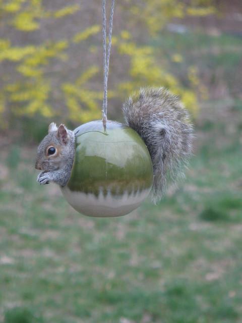 #61: Everyday Animal Naughty Squirrel!