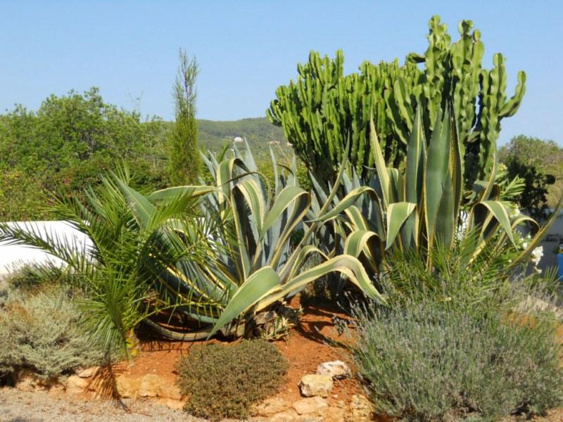 Plantación de un jardín sin riego