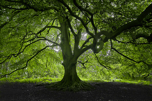 Elm Tree by kevinkpc - (Catching Up)
