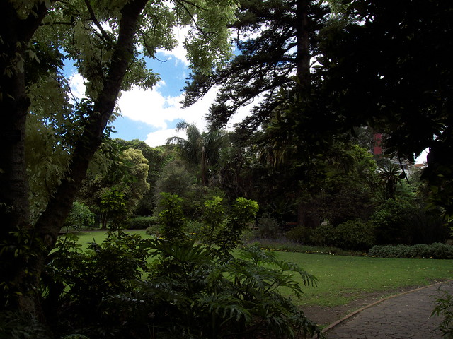 Cape Town : Company Gardens