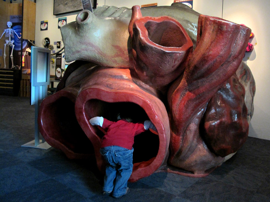 entering the blue whale's heart