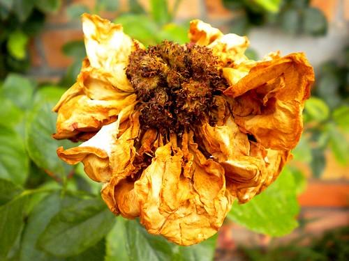 Flor i diferent