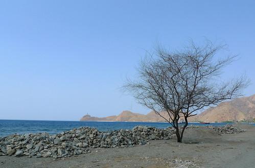 tree on the road to Cristo Rei