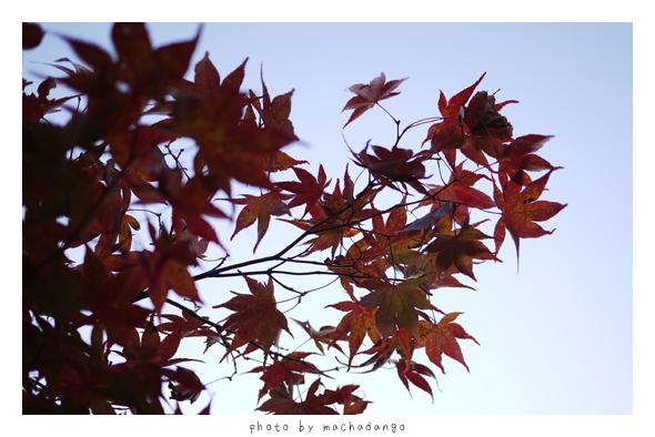 秋天真的到了