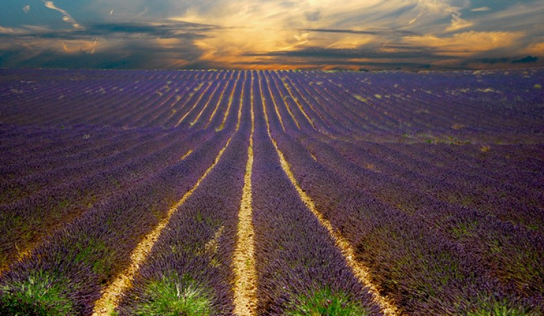 A Lavender Sunset [A Sunset I Can't forget]