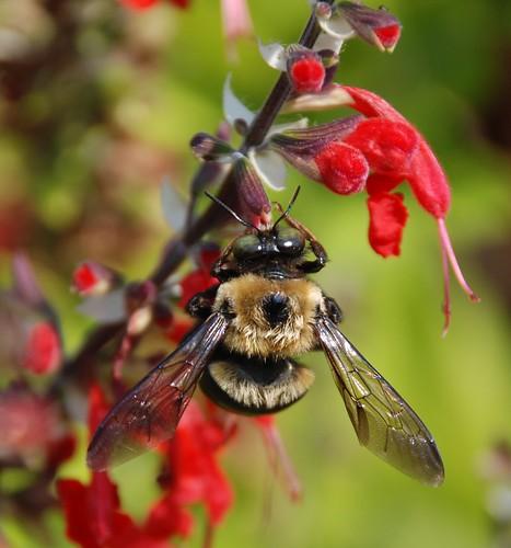 400e bee wings