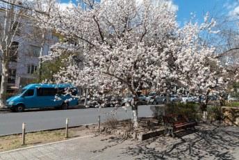 Maar toen ik eenmaal in de veel lager gelegen hoofdstad Jerevan aankwam bleek het daar gelukkig lekker lenteweer te zijn.