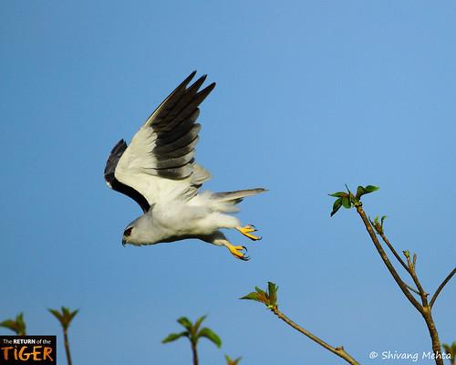 BSK in flight