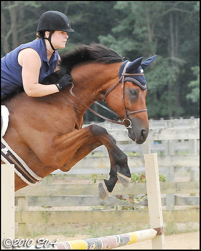 Wizard is aiming for the World Equestrian Games...