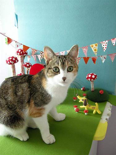 GIANT CAT!!!
