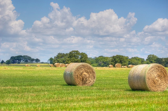 Hay - HDR