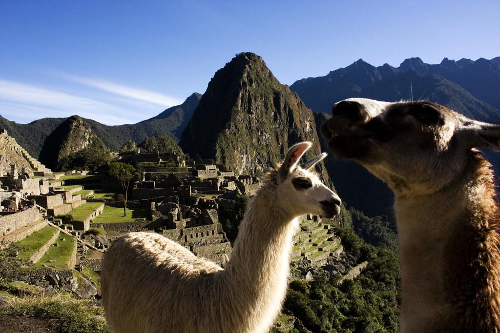 The Landscaping Crew in Machu Picchu 2010
