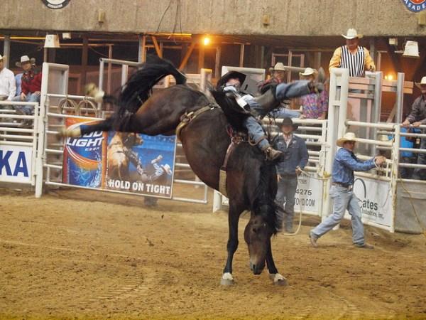 Flickriver: Photoset 'Pasadena Texas Professional Rodeo ...