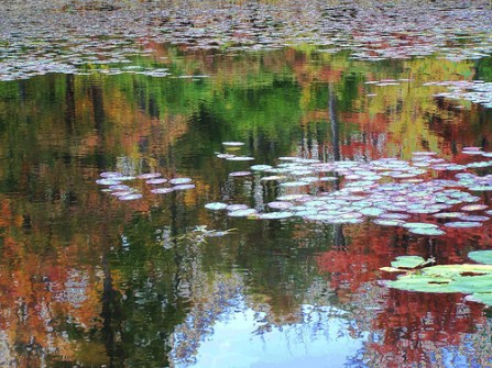 REFLECTIONS ON SUNFISH POND, Loosen Up Lighten Up Day, Pickle Day