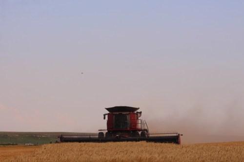 Last field of Dodge harvest.