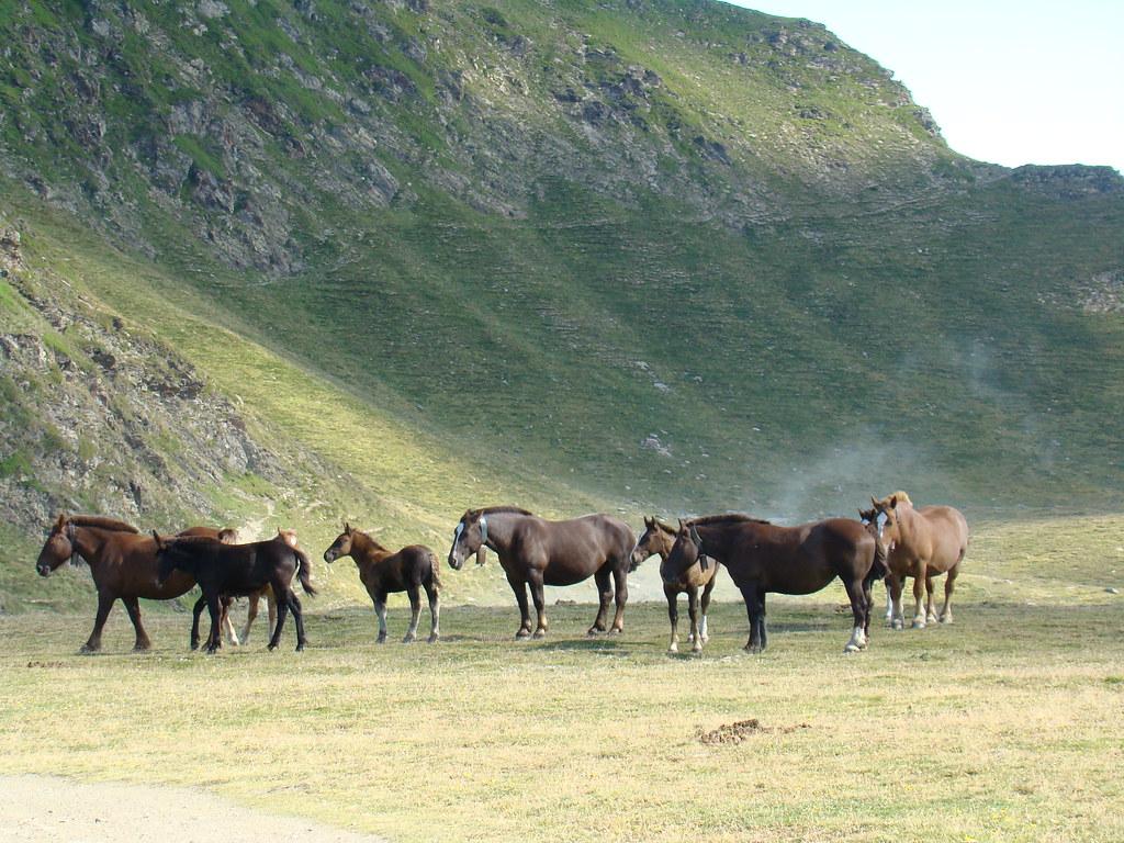 Caballos Andorra 03
