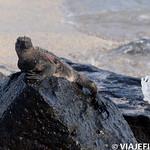 Viajefilos en La Espanola, Galapagos 012