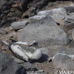 Viajefilos en La Espanola, Galapagos 067
