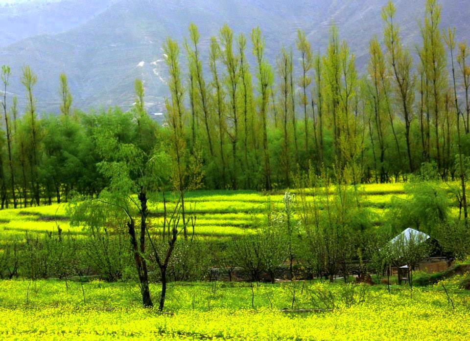 tranquil scene of kokernag on a spring day