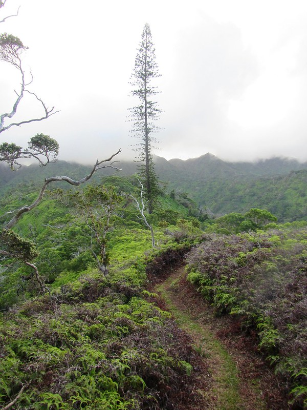 Picture from the Lanipo Trail