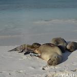 Viajefilos en La Espanola, Galapagos 087