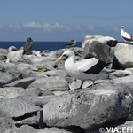 Viajefilos en La Espanola, Galapagos 070