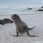 Viajefilos en La Espanola, Galapagos 110