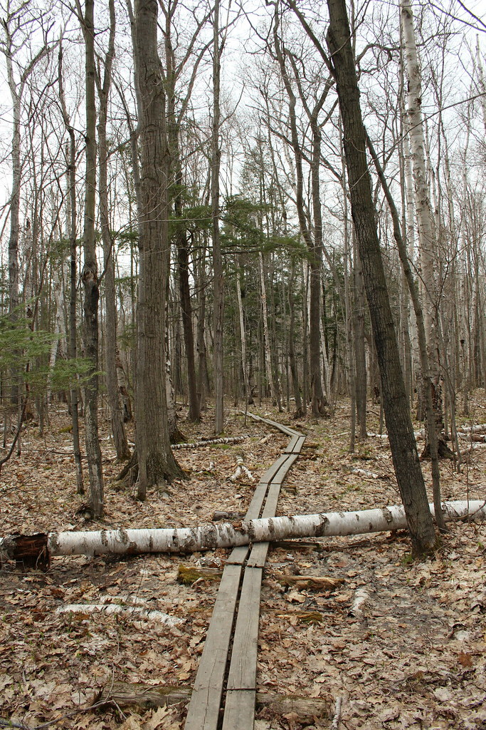 Silhouette Trail 05