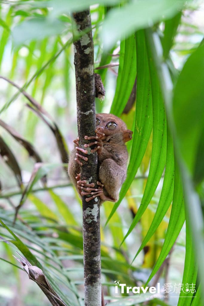 菲律宾薄荷岛眼镜猴保育中心 Tarsier Sanctuary (15)