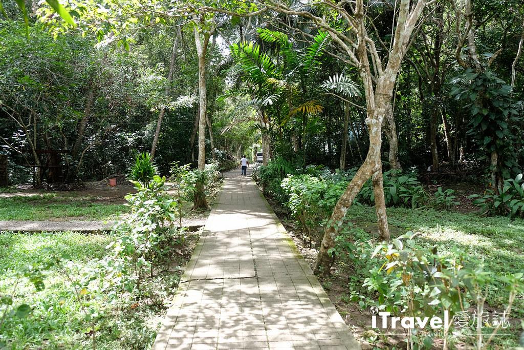 菲律宾薄荷岛眼镜猴保育中心 Tarsier Sanctuary (25)