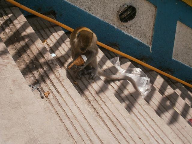 Monkey With Ice Cream