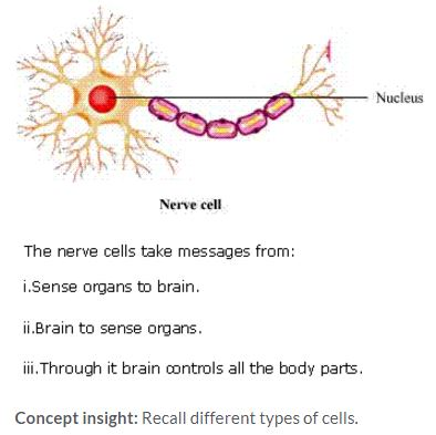 goa-board-class-8-solutions-for-science-cell-structure-and-functions-2