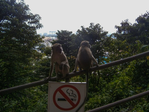 Monkeys Just Hanging Out