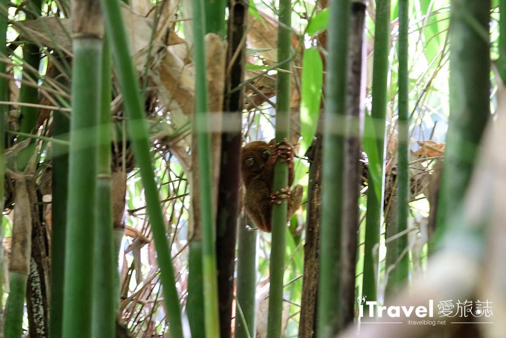 菲律宾薄荷岛眼镜猴保育中心 Tarsier Sanctuary (11)