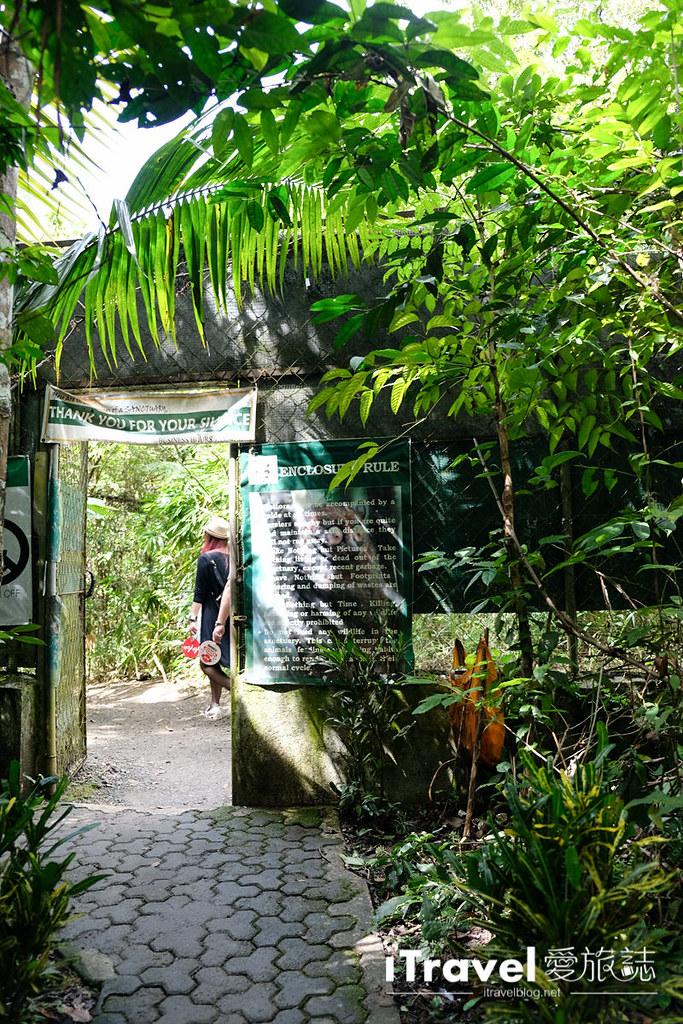 菲律宾薄荷岛眼镜猴保育中心 Tarsier Sanctuary (8)