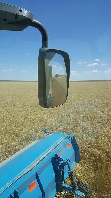 Schemper 2017 - Kansas Stateline Wheat Harvest