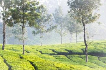 lust-4-life travelblog india kerala munnar (16 von 18)