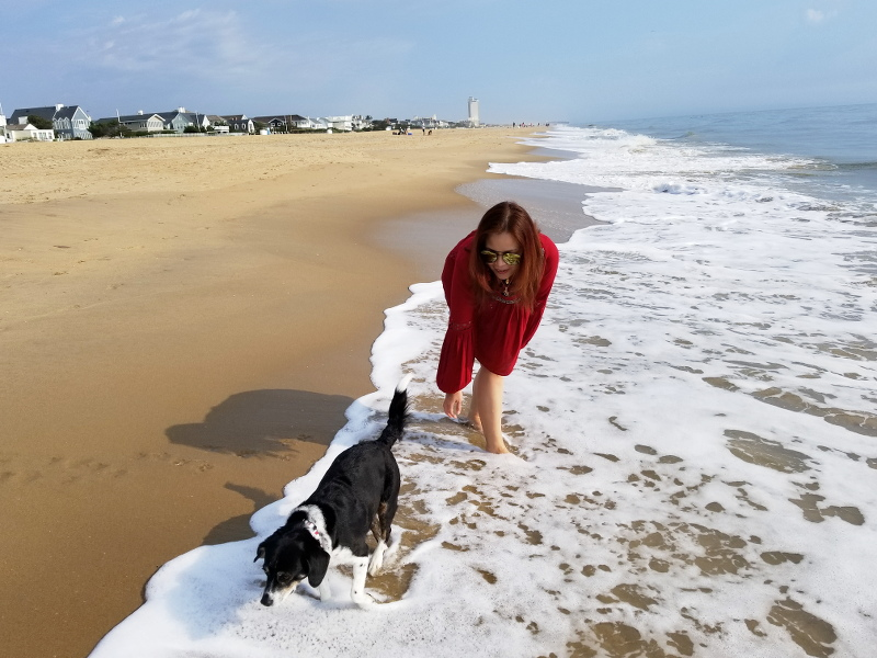 oceanfront-virginia-beach-louis-beagle-dog-8