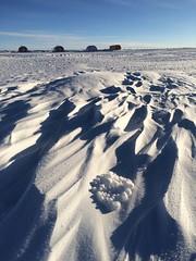 Antarctic tumbleweed