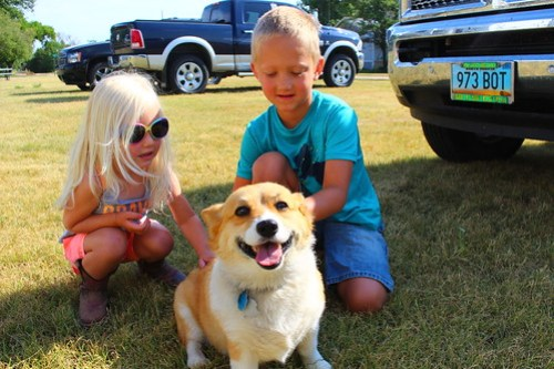 Cotton, Uncle Steve's dog, getting some love from the Lundeen Harvesting kids.