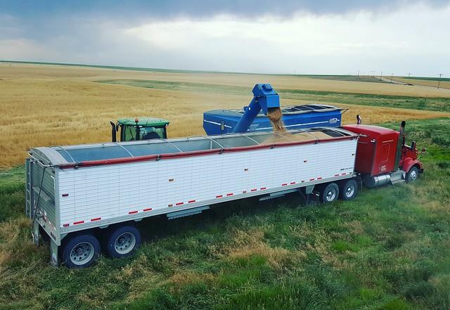 Schemper 2017 - Colorado Wheat Harvest