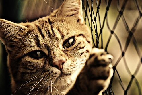 Cat-ID-1054033