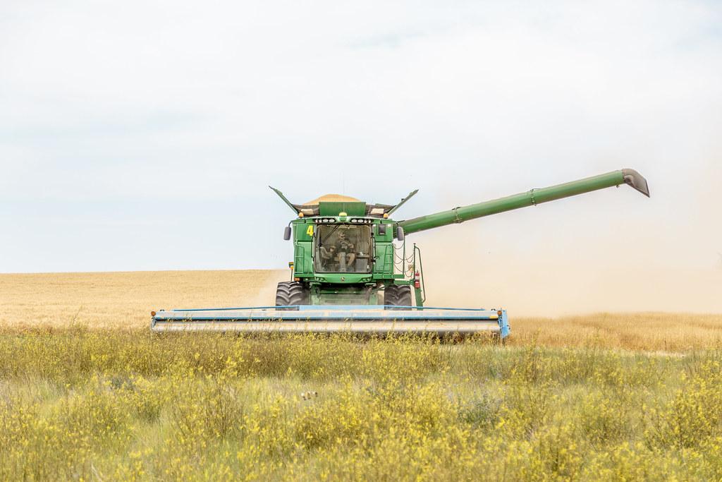 High Plains Harvesting (Laura)