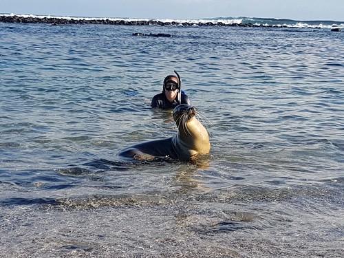 Galapagos Islands – My top 5 animal experiences | Travelgal Nicole
