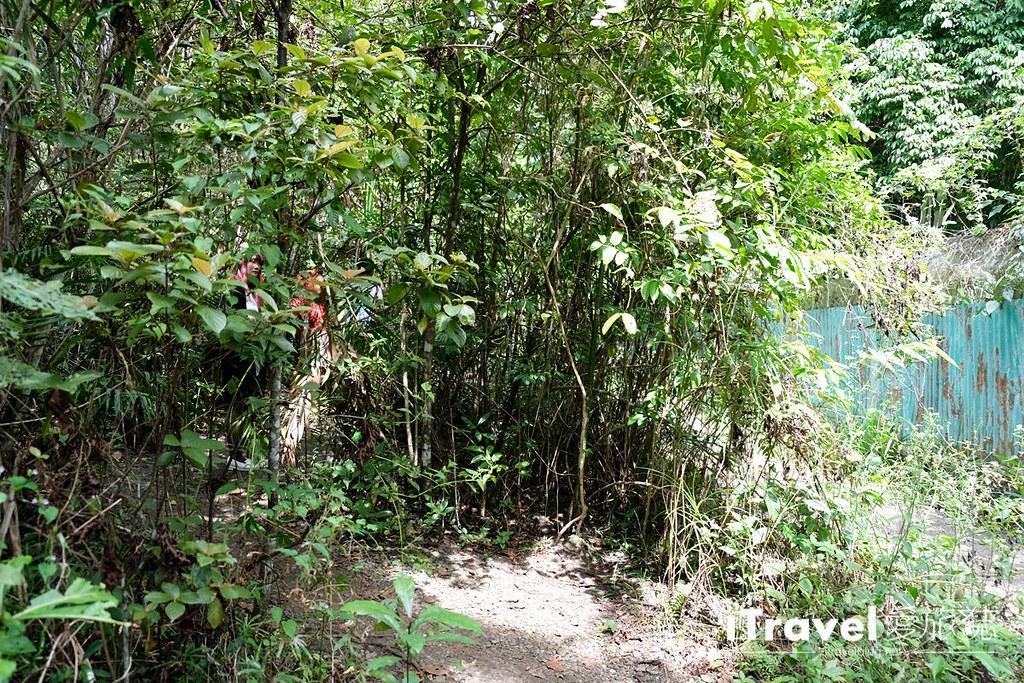 菲律宾薄荷岛眼镜猴保育中心 Tarsier Sanctuary (20)