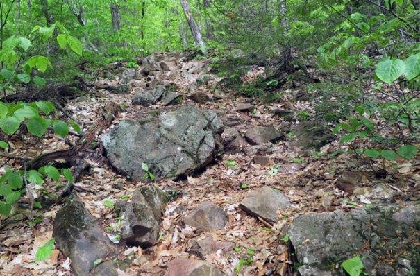 Mt. Morgan Trail Climb