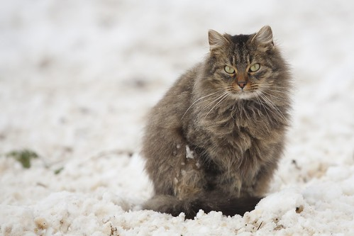 Cat-ID-2216877